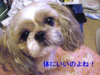 love_20060913_1