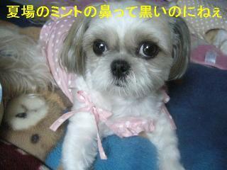 mint_20061212_3