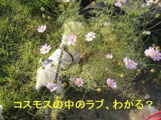 love_20061009_1