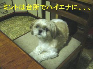 mint_20061011_1