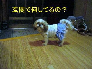 bibi_20061011_1