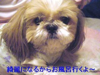 bibi_20061013_1
