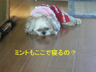 mint_20061015_1