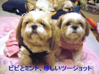 bibimint_20061019_1