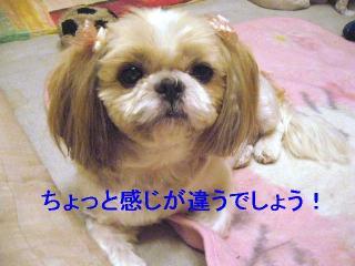 bibi_20061023_2