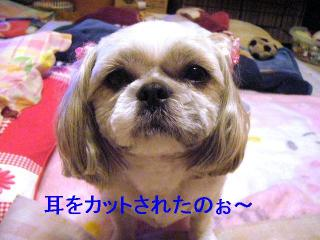love_20061025_1