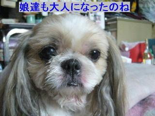 bibi_20061028_1