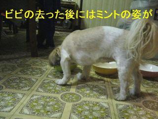 mint_20061101_1