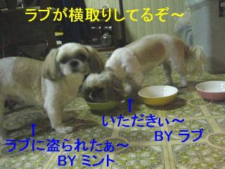 lovemint_20061101_1