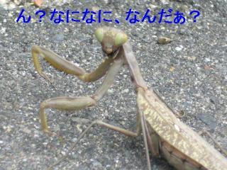 musi_20061029_4