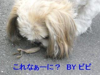 bibi_20061029_1