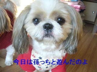 bibi_20061104_1