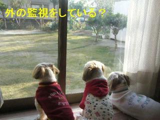 oyako_20061104_1