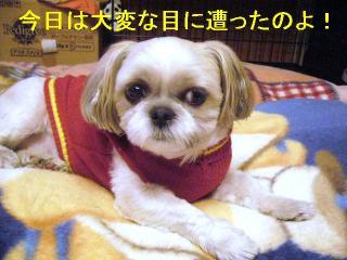 mint_20061105_1