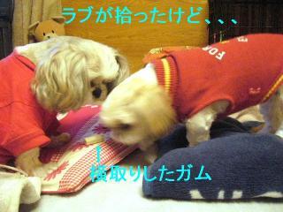 love_20061109_3