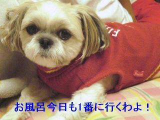 mint_20061110_1