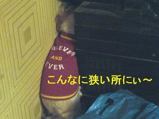 mint_20061111_4