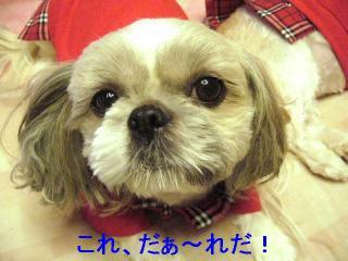 love_20061115_1
