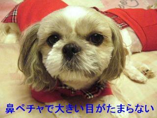 love_20061219_1