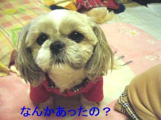 love_20061115_4