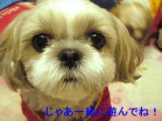 mint_20061119_1