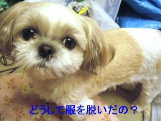 mint_20061121_1