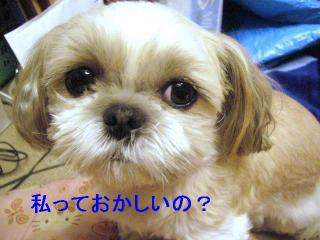 mint_20061212_2