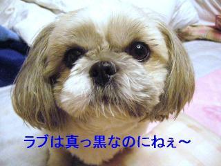 love_20061212_1