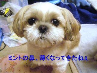 mint_20061212_1