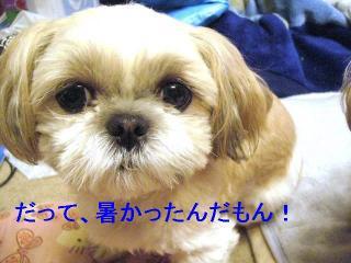 mint_20061121_2