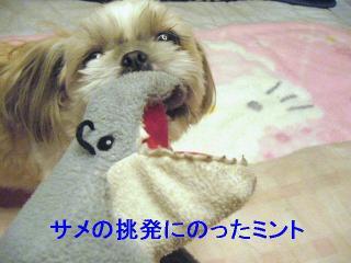 mint_20061122_3