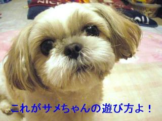 mint_20061122_9