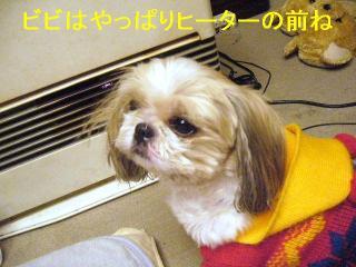 bibi_20061124_1