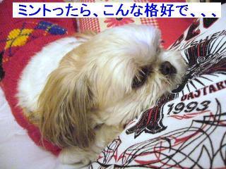 mint_20061124_2