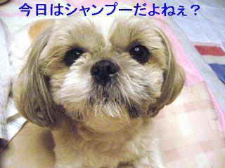 love_20061124_1