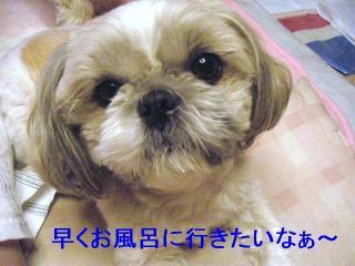 love_20061124_2