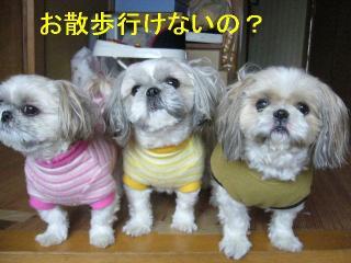 oyako_20061125_1