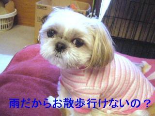 mint_20061126_1