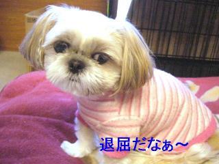 mint_20061126_2