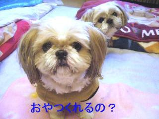bibi_20061126_1