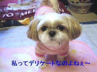 mint_20061213_1