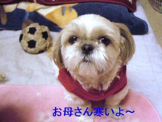 mint_20061204_1