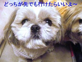 love_20061205_1