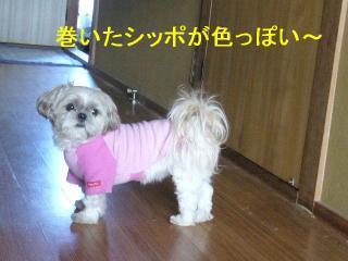 mint_20061219_2