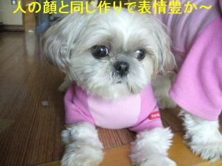 mint_20061219_1