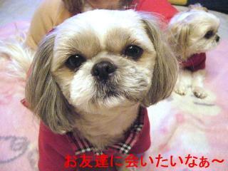 love_20070102_1
