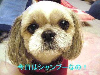 love_20070105_1