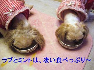 lovemint_20070112_1