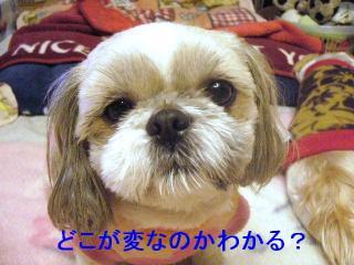 love_20070115_2
