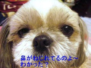 love_20070115_4